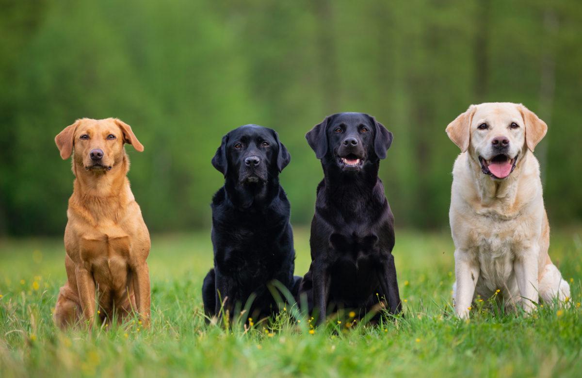 いろんな犬